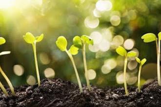 Hortalizas de crecimiento rápido para iniciar tu huerto y no decepcionarte.