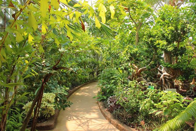 山口県、宇部市のときわ公園の植物園がリニューアルしたよ【Y】 プラントハンター西畠清順、世界を旅する植物館  熱帯アジアゾーン 、ヤシの木やバナナの木