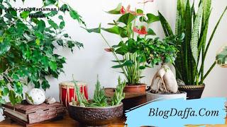 Jenis-jenis tanaman hias murah dan cantik
