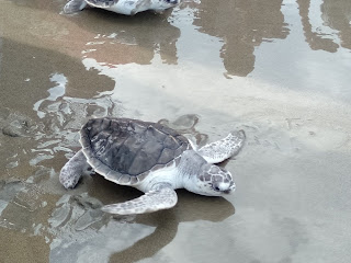 Sea turtle conservation