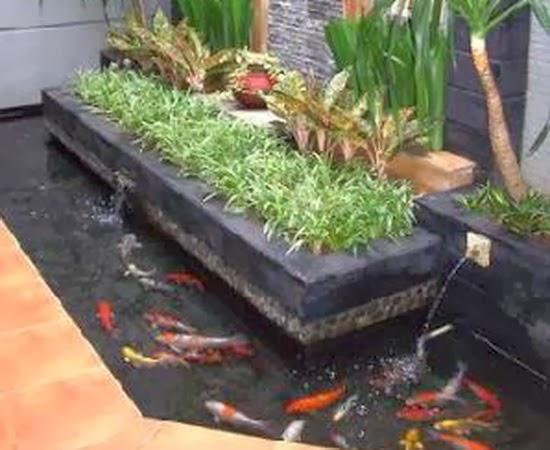 kolam ikan hias minimalis 2
