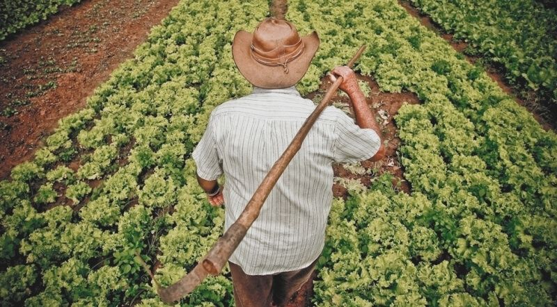 Governo inclui produtores rurais familiares do Amazonas no Garantia-Safra