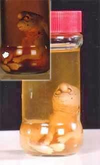 Resultado de imagen de gnomo de girona