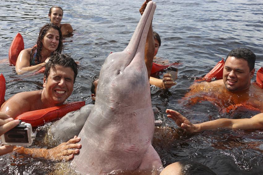 Boto cor-de-rosa Manaus