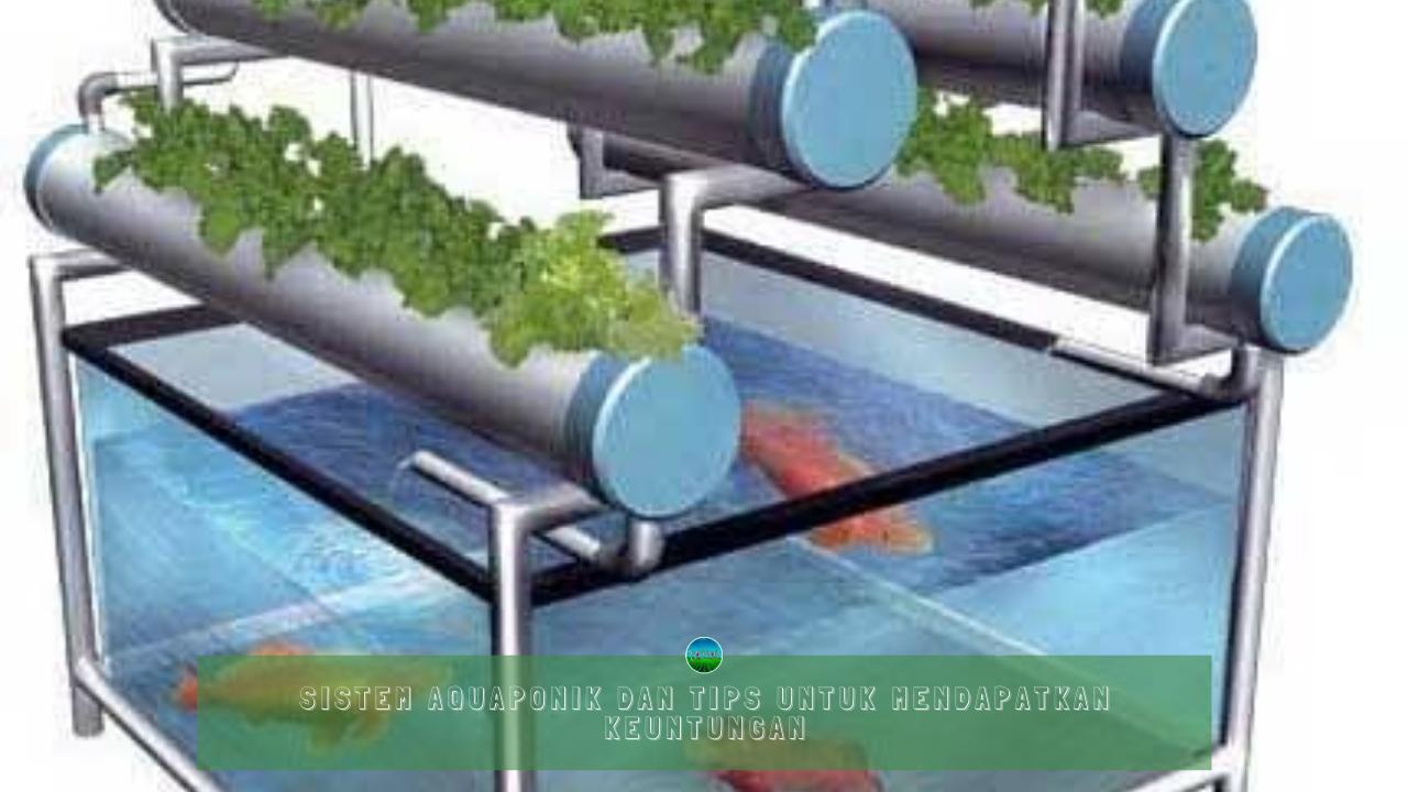 Sistem Aquaponik dan Tips Untuk Mendapatkan Keuntungan