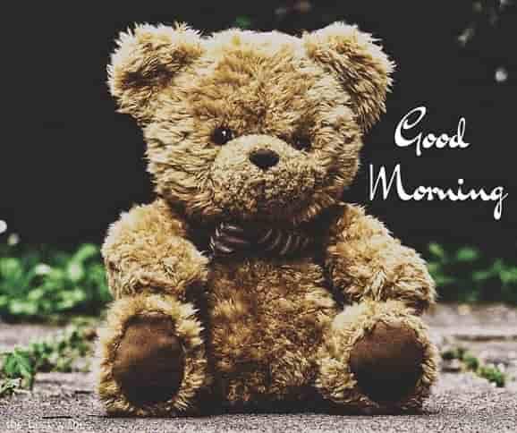 wonderful teddy bear picture