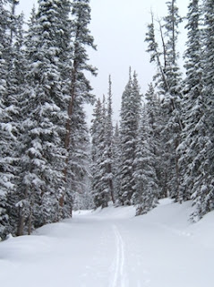 Winter cloudy day in the forest with single cross-country ski tracks leading up the mountain.