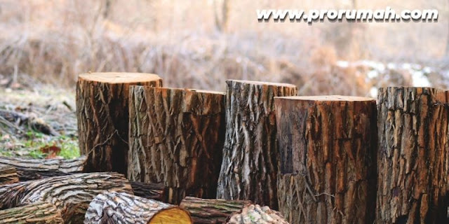 sifat dan karakteristik kayu merbau
