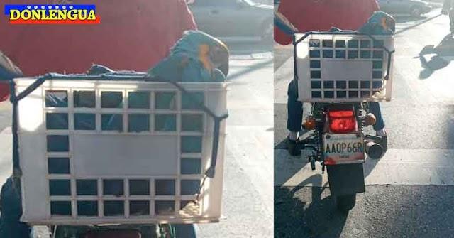 Rescató una Guacamaya y fue detenido por llevarla al Parque del Este