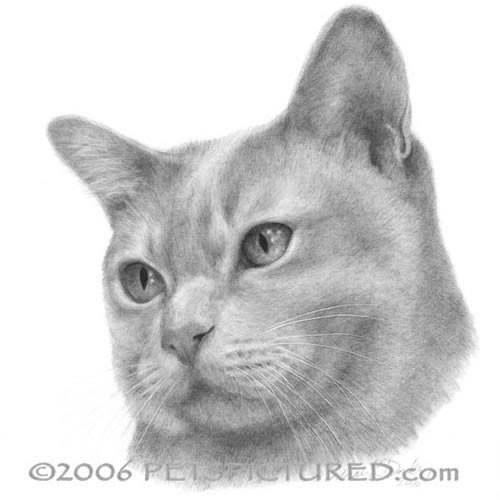 02-Burmese-Cat-Susan-Donley-Cats-and-Dogs-Featured-in-Pencil-Portraits-www-designstack-co