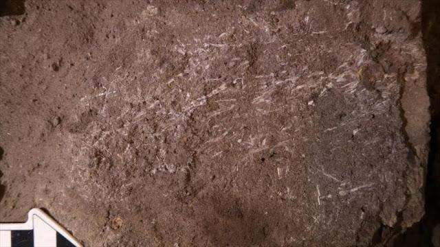 Hallan una cama humana de 200 000 años de antigüedad en Sudáfrica