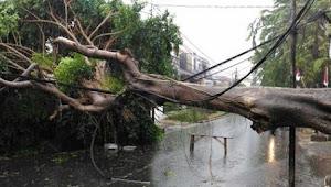 Angin Kencang Sebabkan Pohon Tumbang Hingga Menimpa Kabel Listrik di Karangrayung