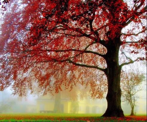 sebuah pohon tua dengan daun rindang