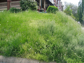 Overgrown Lawns