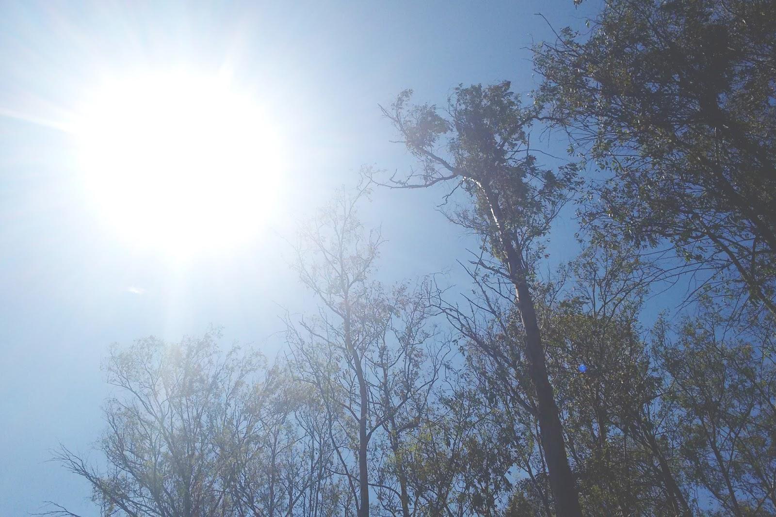 sol queimando árvores verão