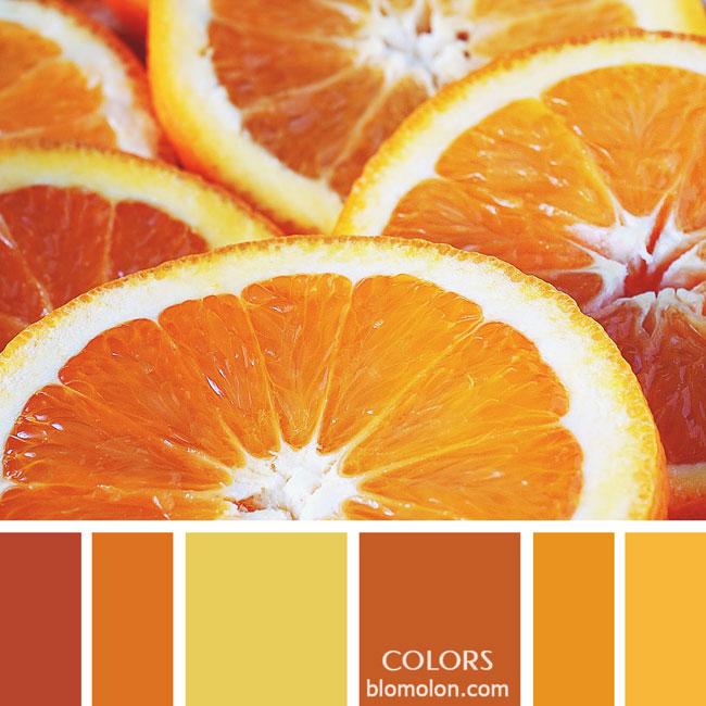 variedad_en_color_paletas_colores_2e
