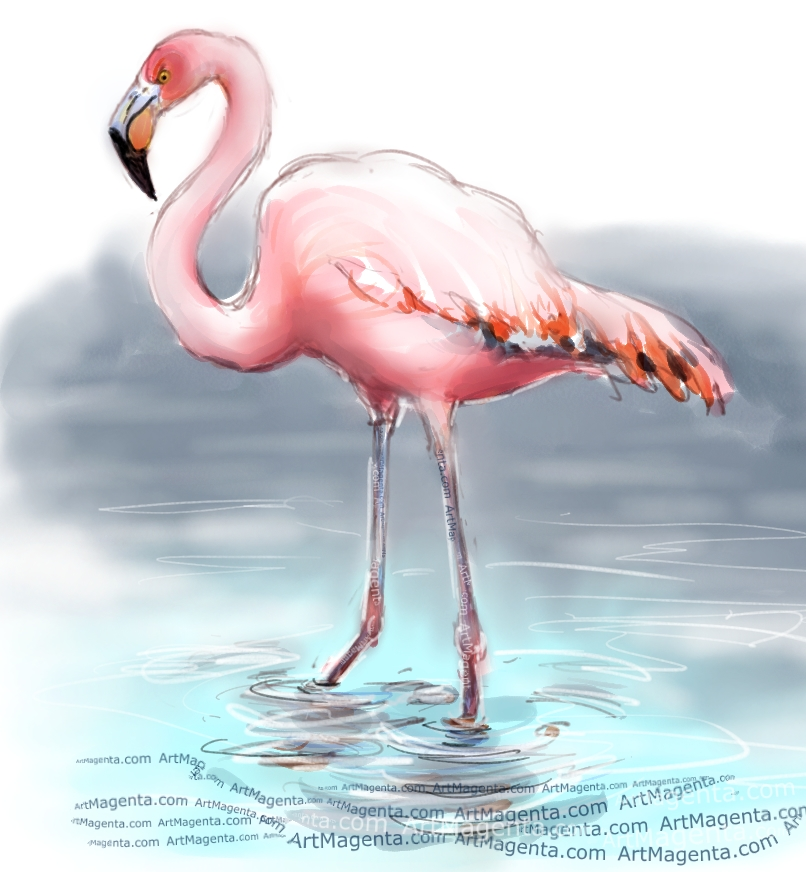 American Flamingo sketch painting. Bird art drawing by illustrator Artmagenta