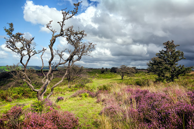Colourful landscape of green and purple in Exmoor National Park