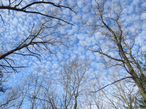 blue sky and clouds behind trees