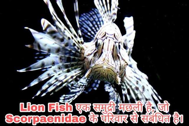 Lion Fish यानी सेर की तरह दिखने वाला ये मछली इंसानों को खा सकता है ? 2021