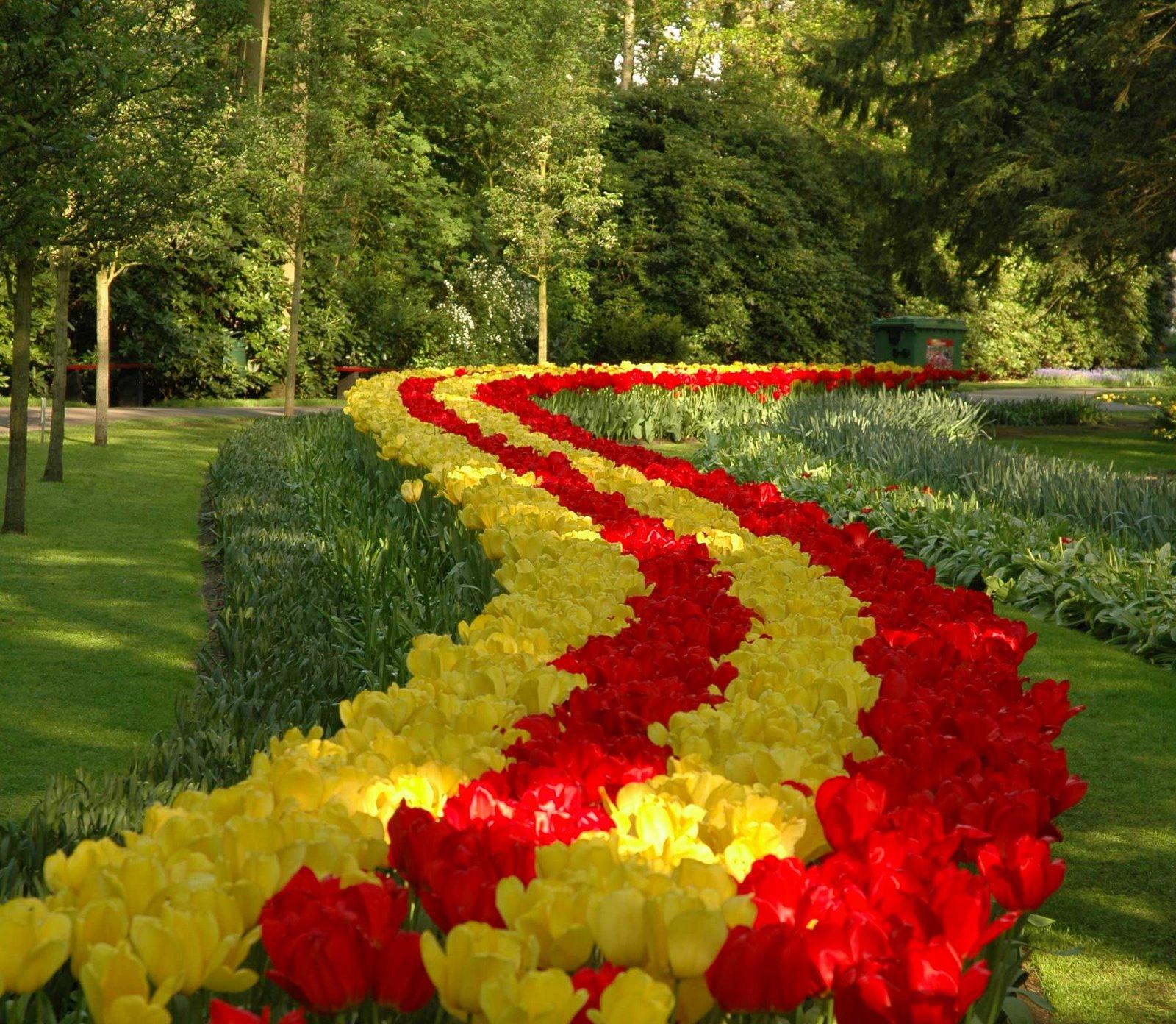 tulips garden wallpaper - photo #25
