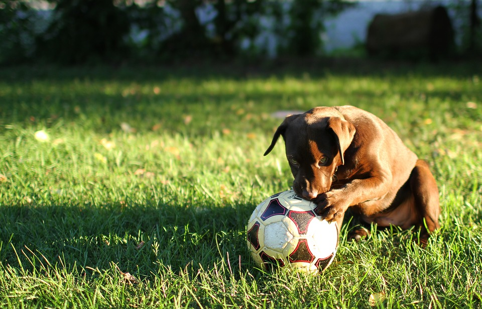 10 Ways Your Dog Can Help You Lose Weight