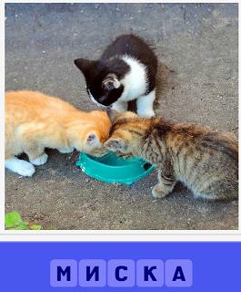кошки склонились к миске, которая пустая без корма