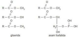 Gugus gliserida dan asam fosfatida