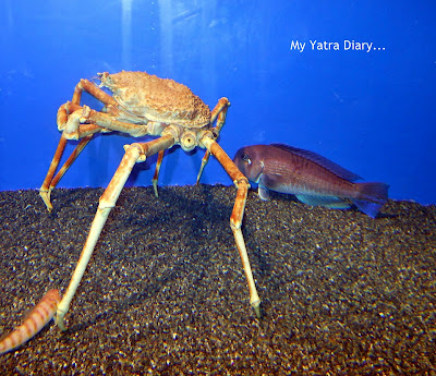 Crab at the Epson Aquarium, Prince Hotel Shinagawa - Japan