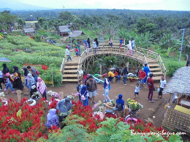 Wisata Agro Expo Taman Suruh Banyuwangi.
