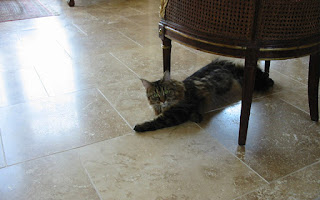 A cat stretching on the floor