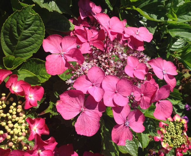 picture of pink flowers with green leaves