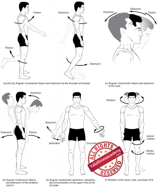أشكال الحركات الأساسية لجسم الإنسان