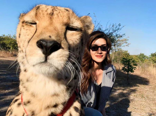 Kriti Sanon Faces Backlash For Posing With A Cheetah
