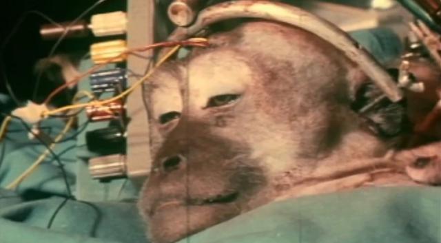 The Shocking Monkey Head Transplant Experiment
