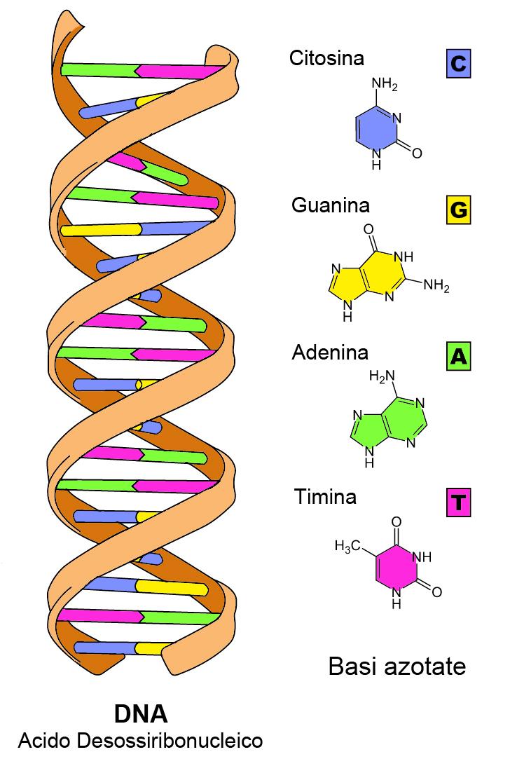 Manipolazione genetica e tecnologia