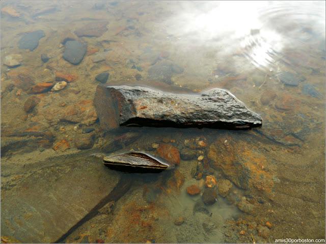 Almejas en el Lago Graham en Maine