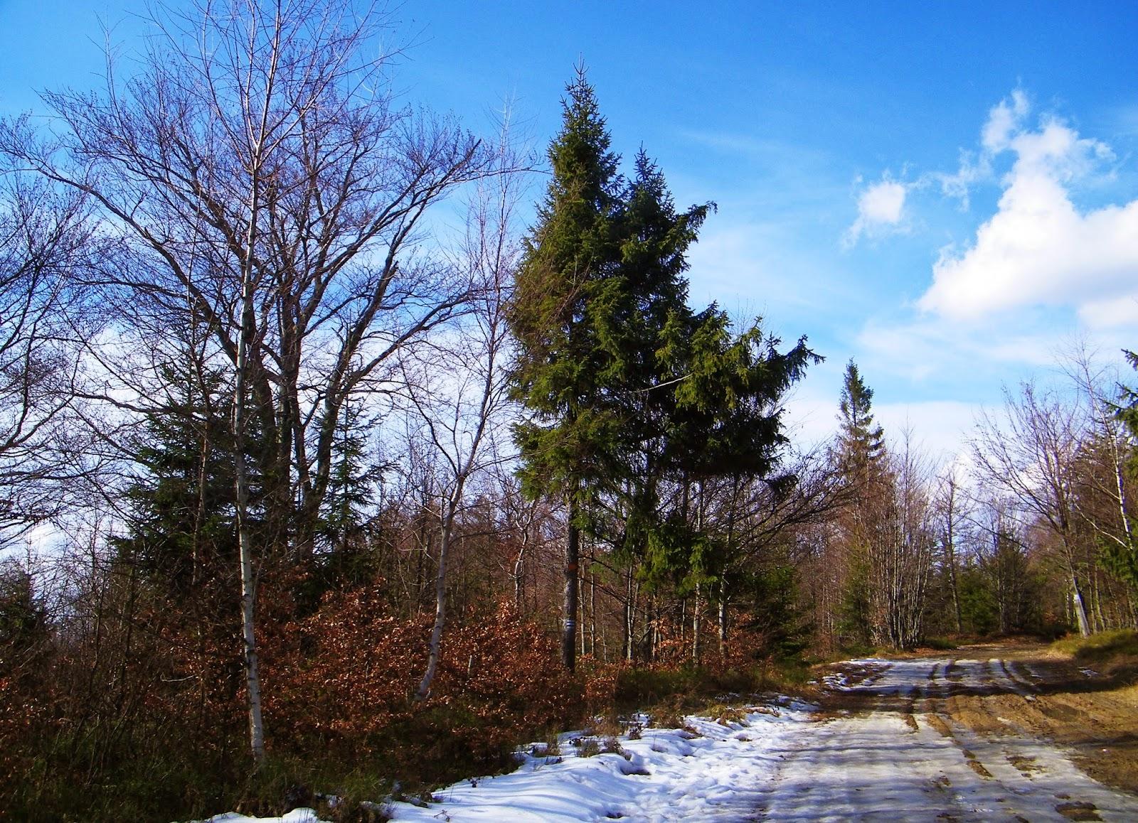 Szlak na Czupel - Beskid Mały