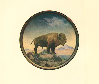 A watercolor painting of a bison.