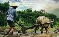 Pengertian Petani, Sejarah, Metode, Peran, dan Organisasinya