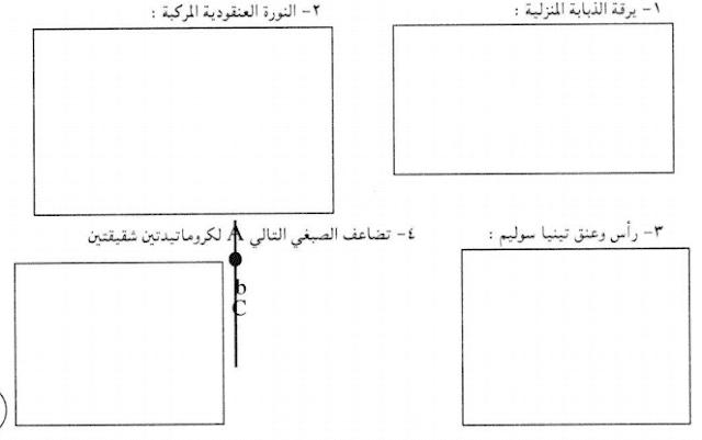 امتحان الشهادة السودانية 2019