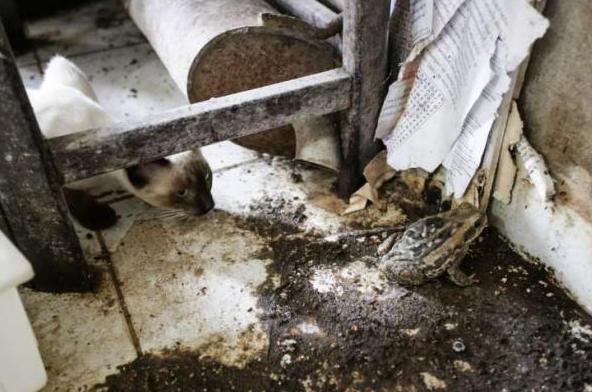 Em  Batalha, FPI flagra e interdita queijaria que colocava em risco a saúde da população
