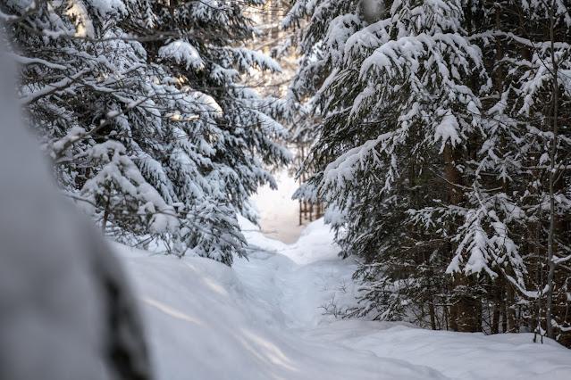 Rundweg Felswandergebiet  Wandern im Nationalpark Bayerischer Wald 05