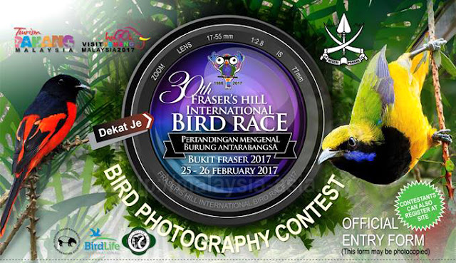 Bird Photography Contest Fraser's Hill