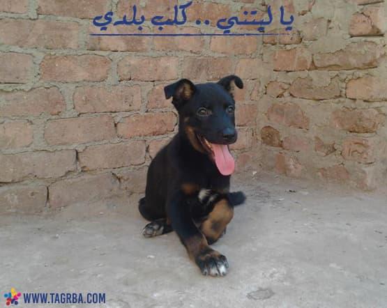 يا ليتني .. كلب بلدى - فلسفة على منصة تجربة