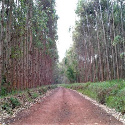 A gente fez de conta que não ia chover, pois queríamos conhecer o Pico do Gavião, acessível por uma estrada de terra que parte da ligação entre Andradas e Poços de Caldas. Os primeiros quilômetros são tranquilos entre os eucaliptais.