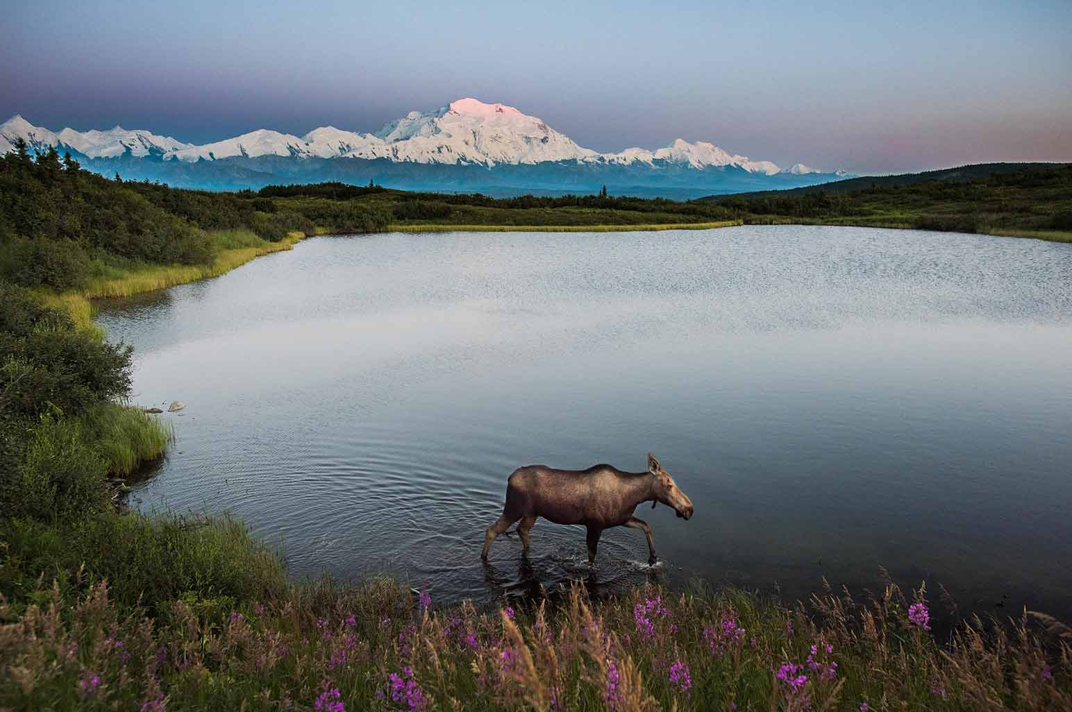 Fascinating Facts about Denali National Park