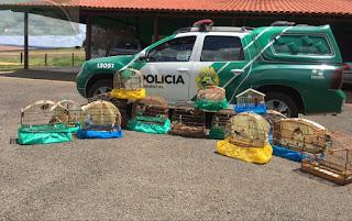 Assaí-POLÍCIA AMBIENTAL APREENDE PÁSSAROS SILVESTRES E MULTA INFRATOR EM R$25 MIL REAIS