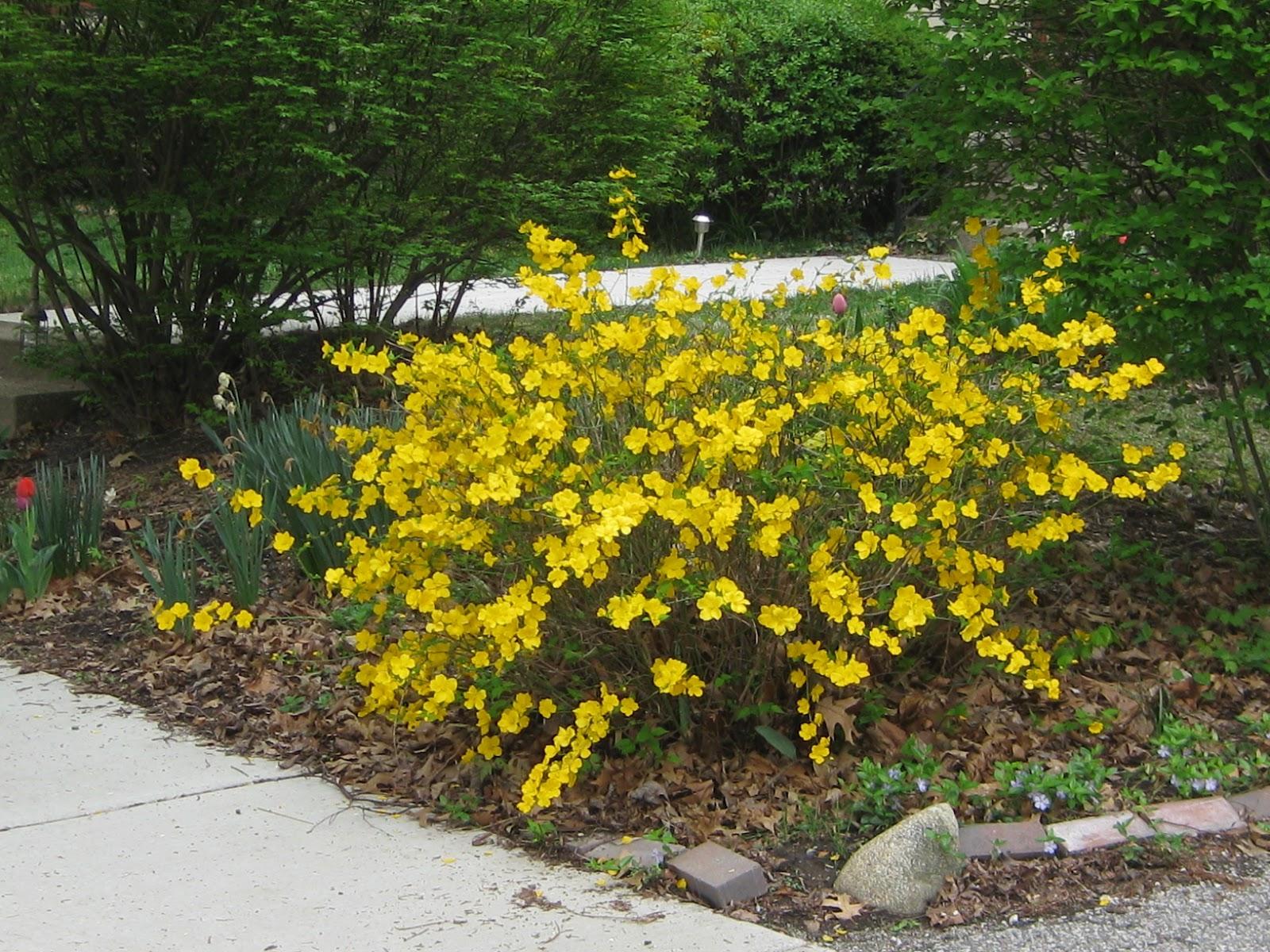 Preferred Hunkey Dorey Land: Flowering bush, zentangle, quote FU47