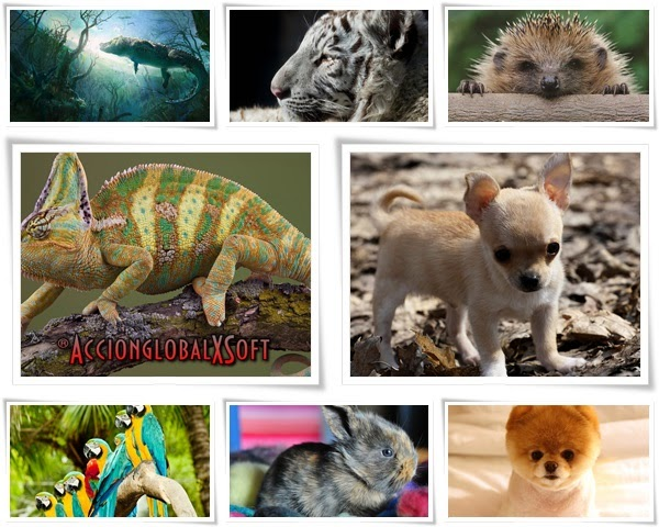 Wallpapers fauna HD - Pack 17